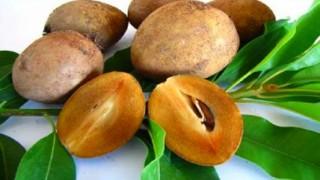 পুষ্টিগুণে অনন্য ফল 'সফেদা'